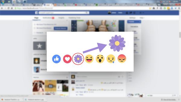 """أكتشف السر وراء اضاف فيسبوك رمز """"الزهرة البنفسجية"""" إلى ازرار الانطباعات ؟"""